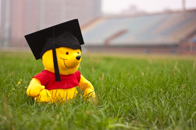 bear with graduation hat on